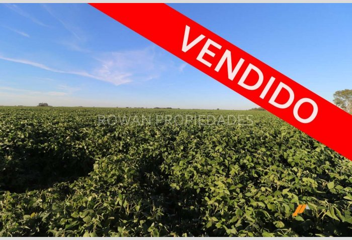 Campo en VENTA - 80 hectáreas - Coronel Isleño- Part. Chacabuco - Prov. de Bs. As.