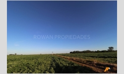 RP186, 128 hectáreas de Campo Agrícola en VENTA - O'higgins, Part. de Chacabuco - Prov. Bs. As.